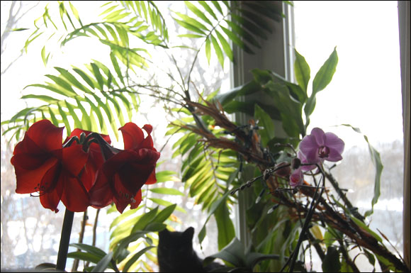 Orchids and Amaryllis