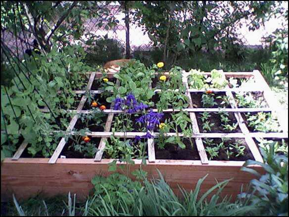 Raised Bed Box in May
