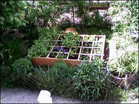 Overhead view of raised bed garden box